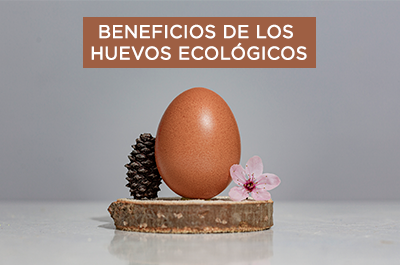 beneficios-huevos-ecologicos